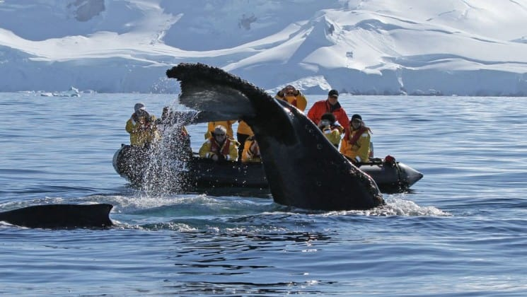 a humpback whale's tail breaches the ocean surface in front of a zodiac full of passengers in antarctica