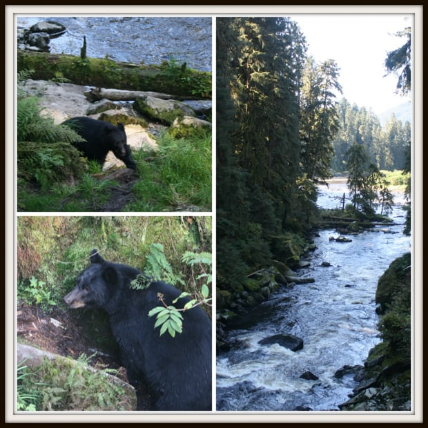 black bear walking up a hillside and view of a river from the forest.