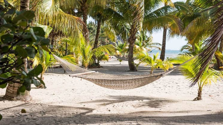 A beach with a hammock and light sand and lots of palm trees.