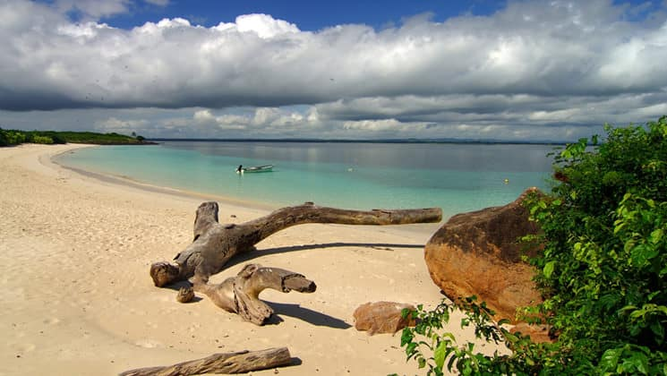 Remote white-sand beach with drift wood in Panama