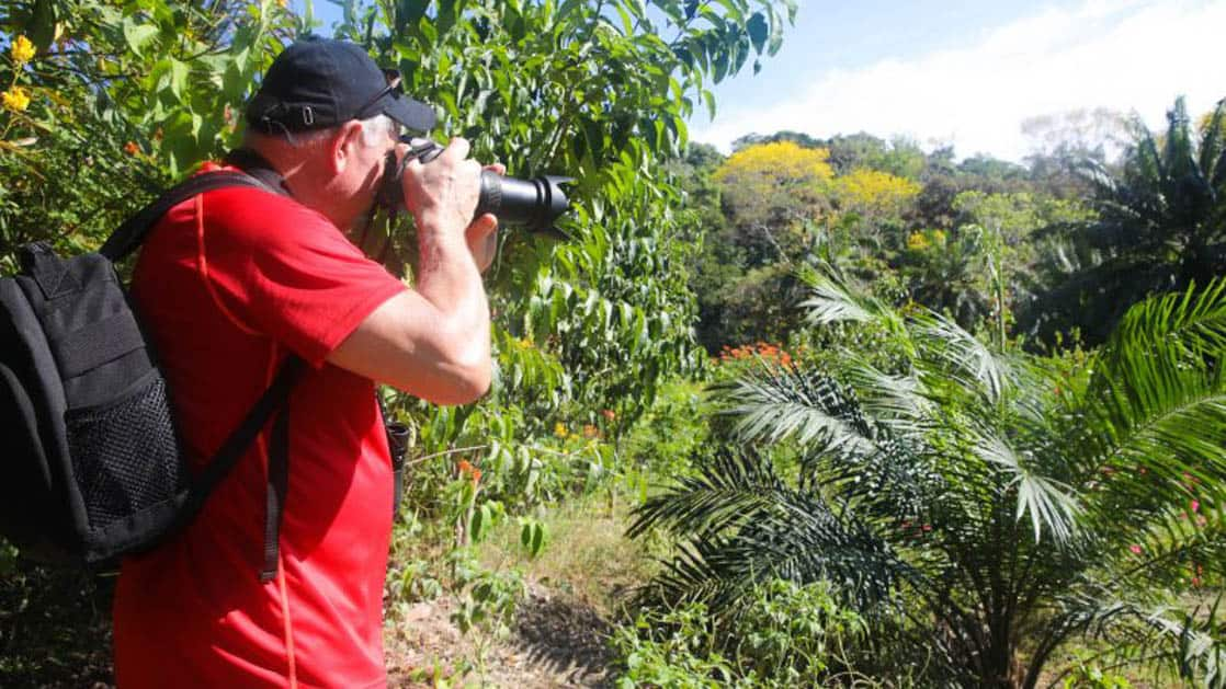 small ship cruise traveler takes a picture downward into the Caribbean jungle on a sunny day