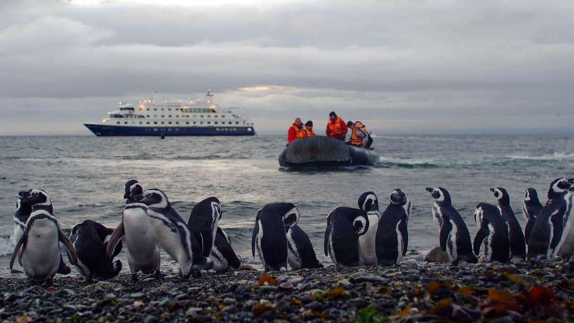 people on a zodiac skiff travel from a patagonia small ship to shore, where a group of penguins is standing