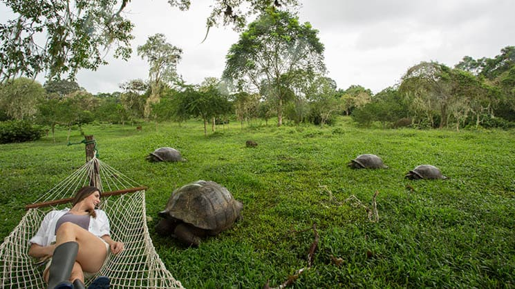 galapagos adventure traveler laying on a hammock above a field full of tortoises