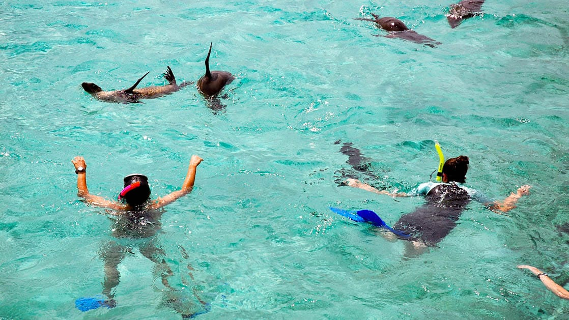 adventure travelers snorkeling with galapagos sea lions in turquoise water