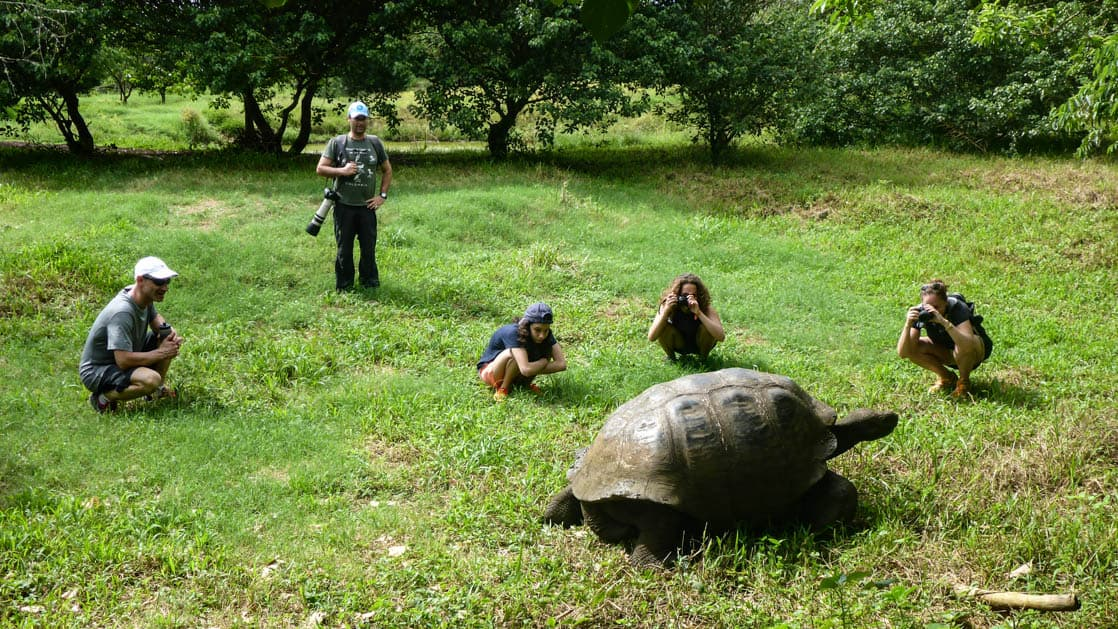 galapagos family travelers sit on bright green grass watching a tortoise walk by on a sunny day