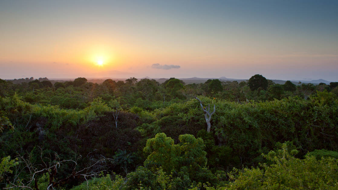 view of the jungle canopy from galapaos safari camp at dusk