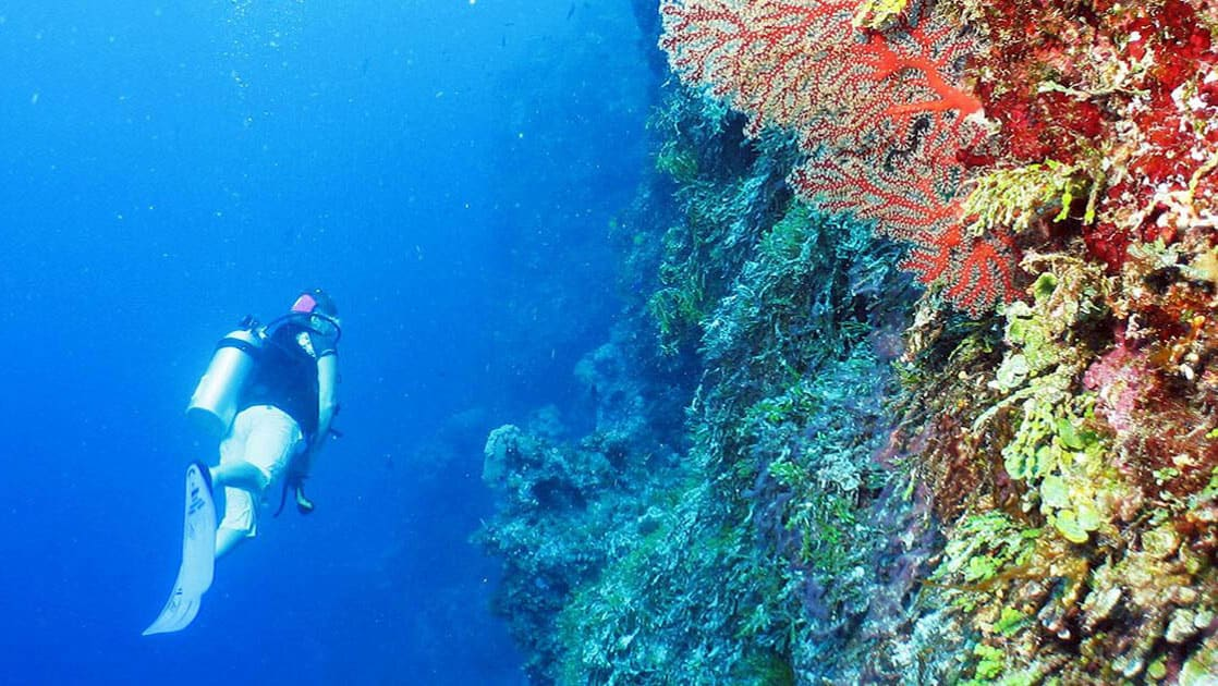 traveler scuba diving alongside a vibrant reef on the Islands of Indonesia small ship cruise
