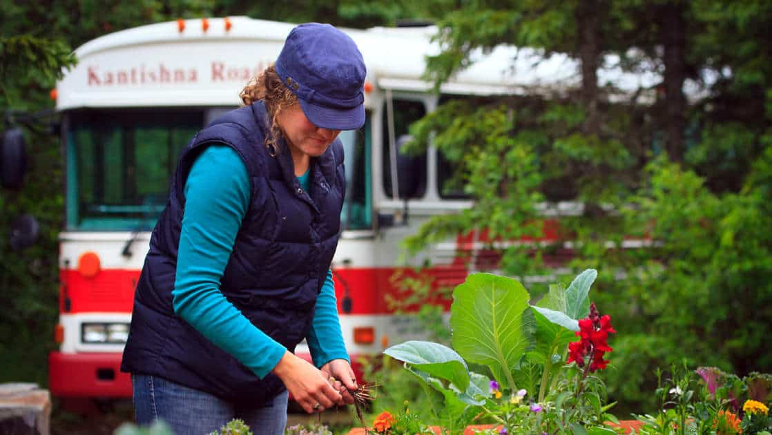 Woman picking items out of the garden at the kantishna roadhouse wilderness lodge in denali national park with a school bus behind