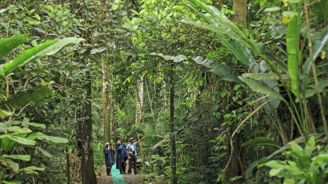Guide pointing up into the trees during a jungle walk while the rest of the group is looking through their binoculars