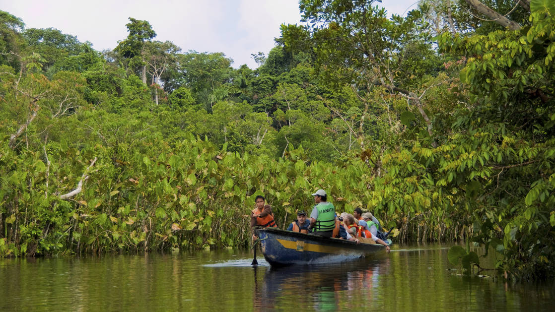 canoe with people on an excursion looking for wildlife in the trees along the river