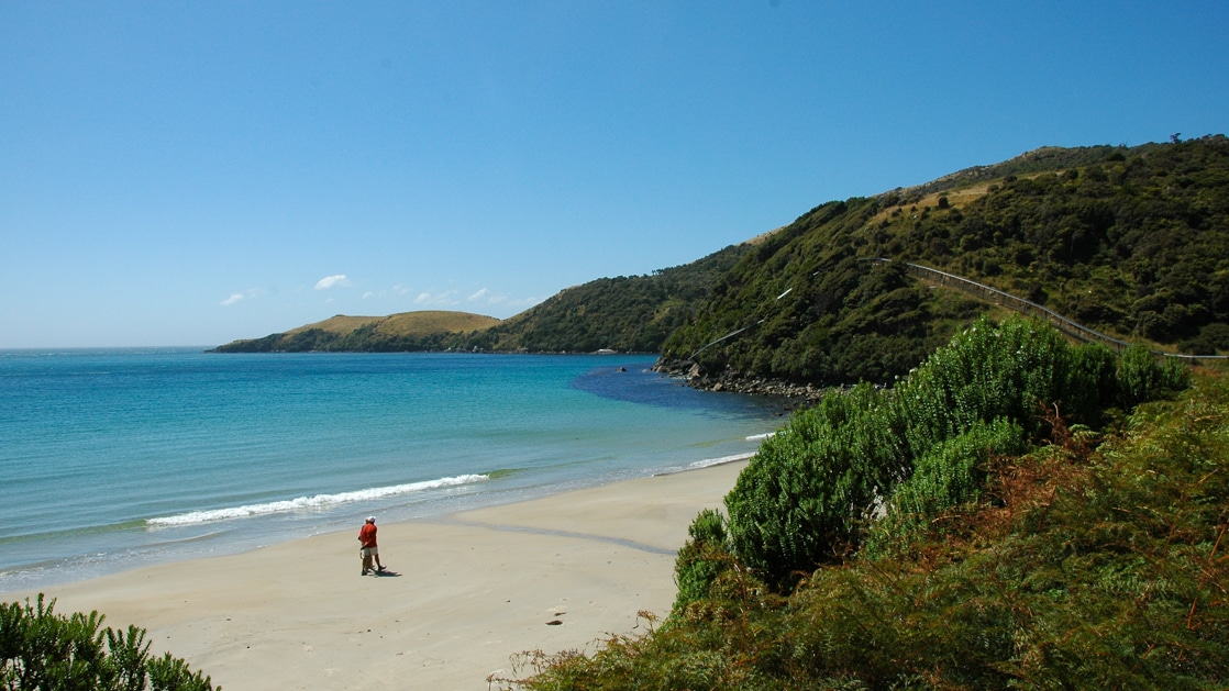 Person walking along the white sand beach next to the turquoise ocean water and the green cliffs on a shore excursion in New Zealand.