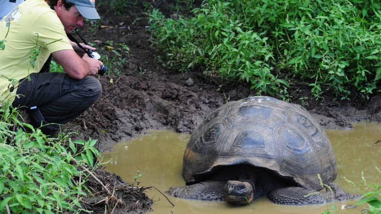 solo traveler takes a picture of a tortoise sitting in muddy water at galapagos safari camp