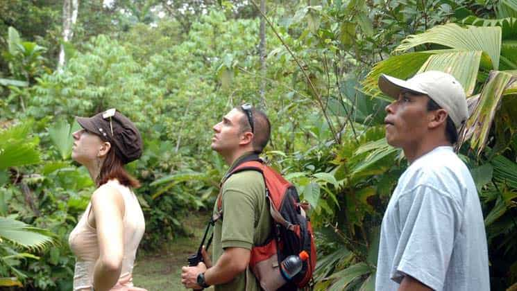 Three people looking up while exploring the jungle in Panama.