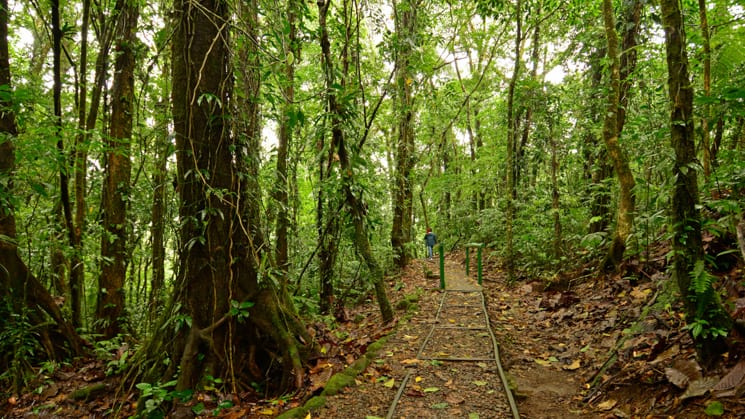 A rainforest trail surrounded by green trees in Costa Rica