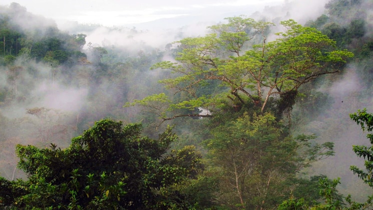 A view of a misty rainforest with a river running through it in Costa Rica.
