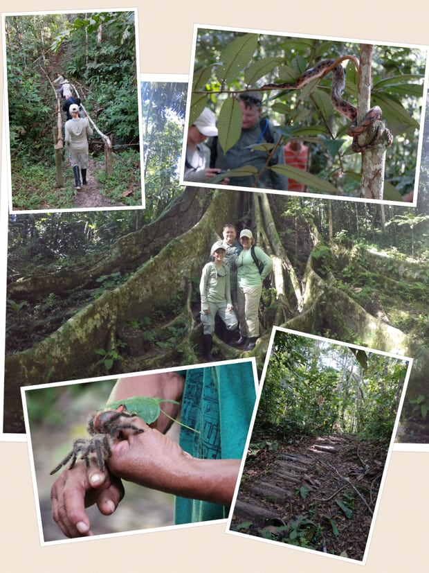 Collage of photos taken on a jungle tour from their small ship Amazon cruise including trees, tarantulas, hiking paths, and a snake.