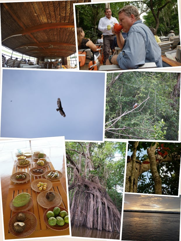 Collage of photos from a small ship cruise in the Amazon including the decks, birds, local foot, tree roots, and a sunset.