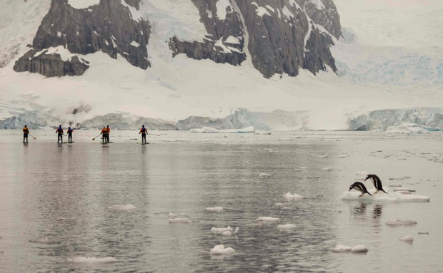 A group of people stand-up paddleboarding while penguins hangout on floating ice.