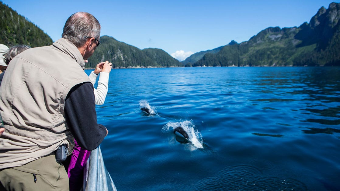 Travelers lean off a boat to photograph Dall's Porpoise coming above calm blue water on the Alaska Grand Adventure.