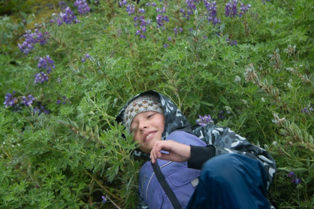One young boy laying in a field of wildflowers while on a land-tour in Alaska.