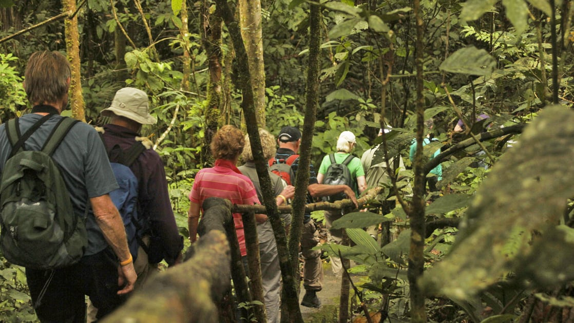 Group of small ship passengers on a guided hike excursion in the jungle in ecuador