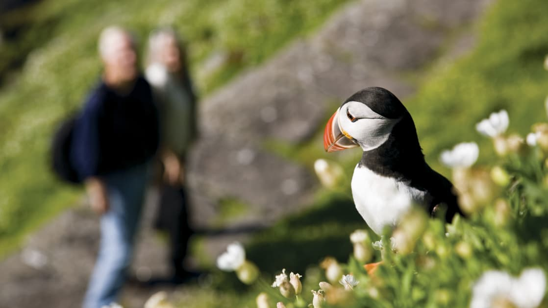 Couple hiking around Skellig Michael with a Puffin in the grass in the foreground