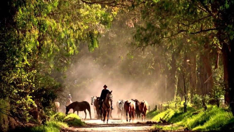 cowboy driving horses down dusty, tree-covered road on andes highland haciendas land tour in ecuador