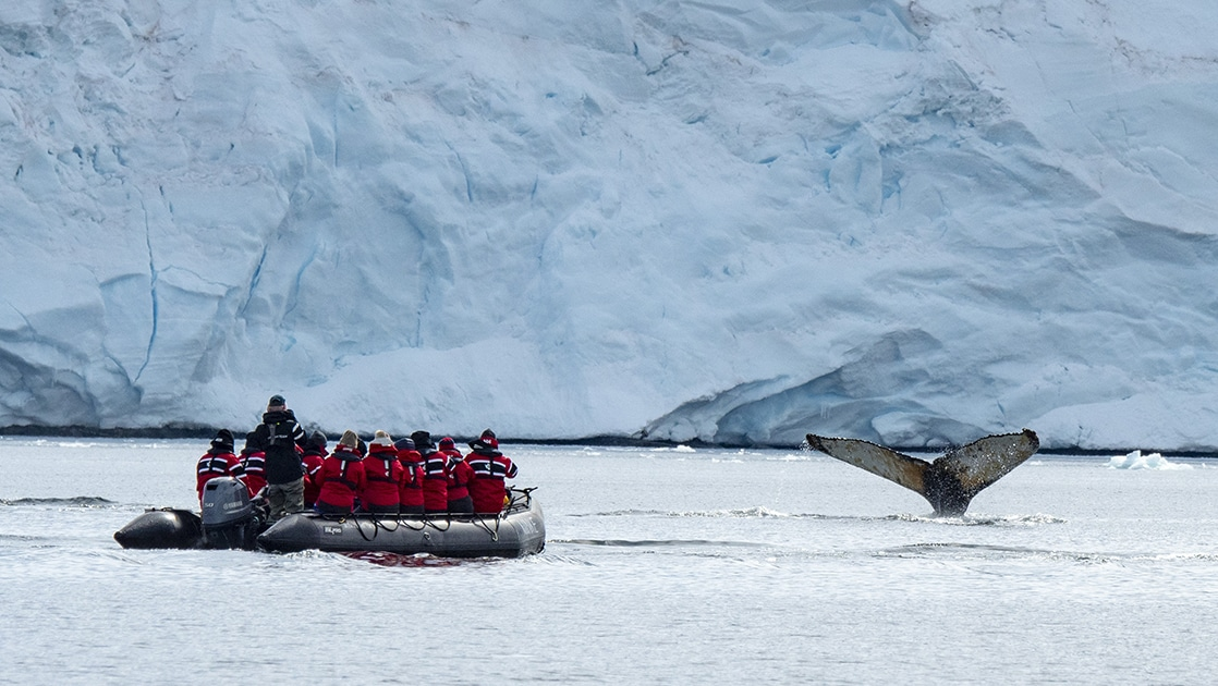 Antarctica travelers spot a whale fluke while on a Zodiac cruise by the coast.