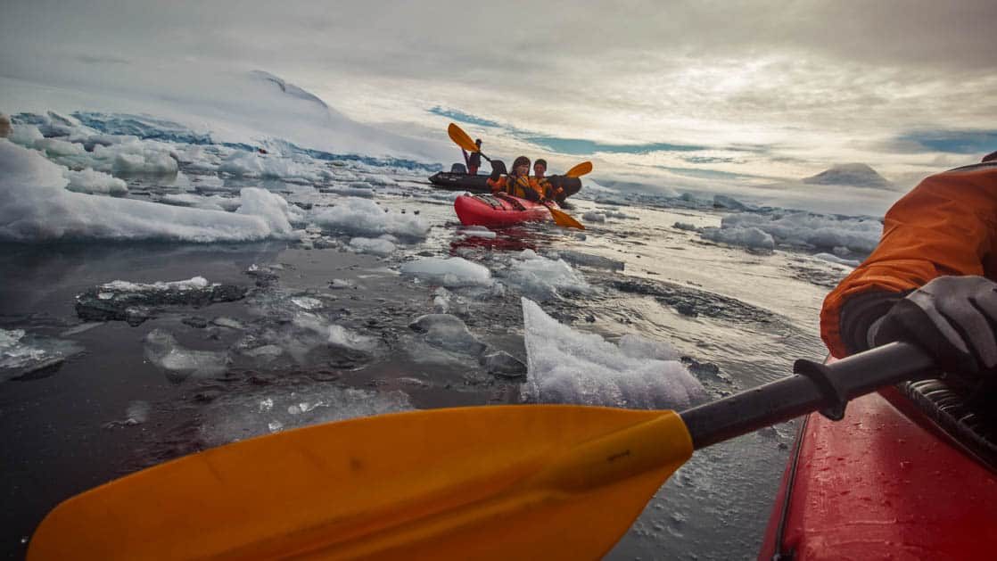 adventure travelers kayak in the morning in antarctica among a sea of icebergs