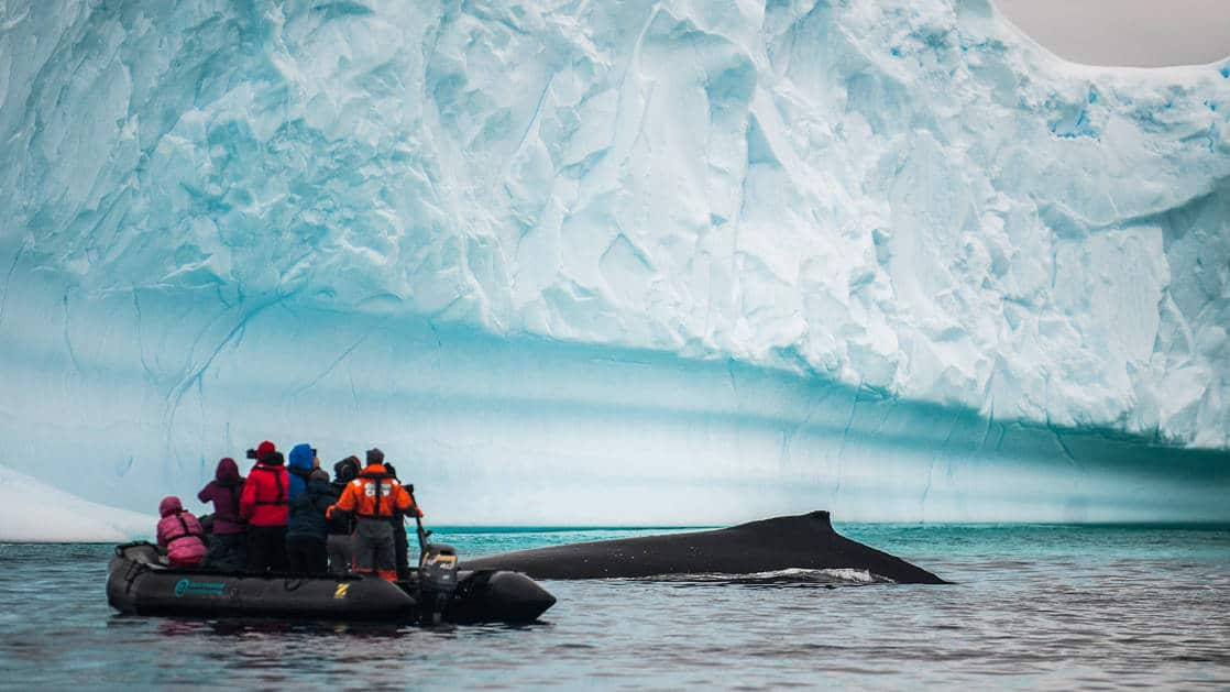 Guests on a zodiac near an iceberg in the Polar circle viewing a whale breaching the surface