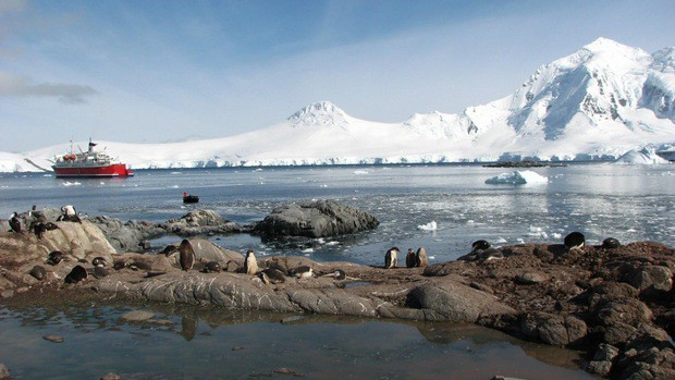 Penguins on rocks with small cruise ship in background in Antarctica.