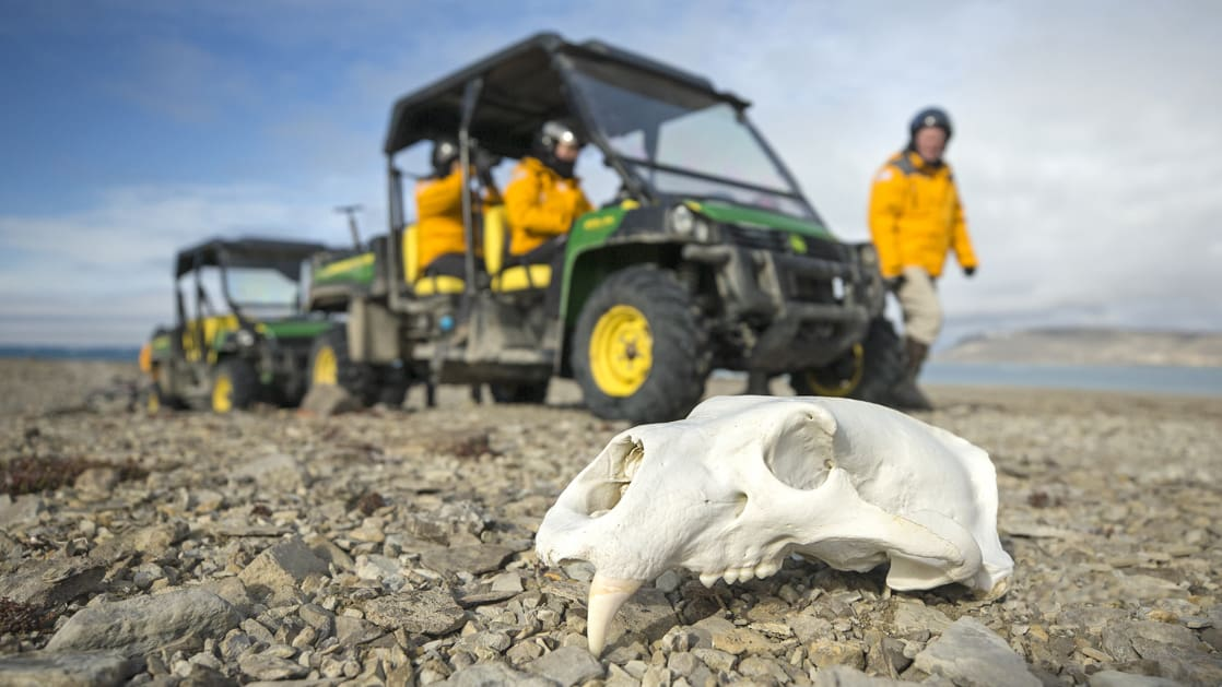 A group of Arctic travelers in a ATV exploring the tundra and finding a polar bear skull.