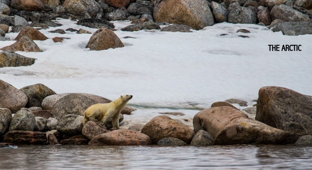 A polar bear standing on boulders looking out at the water