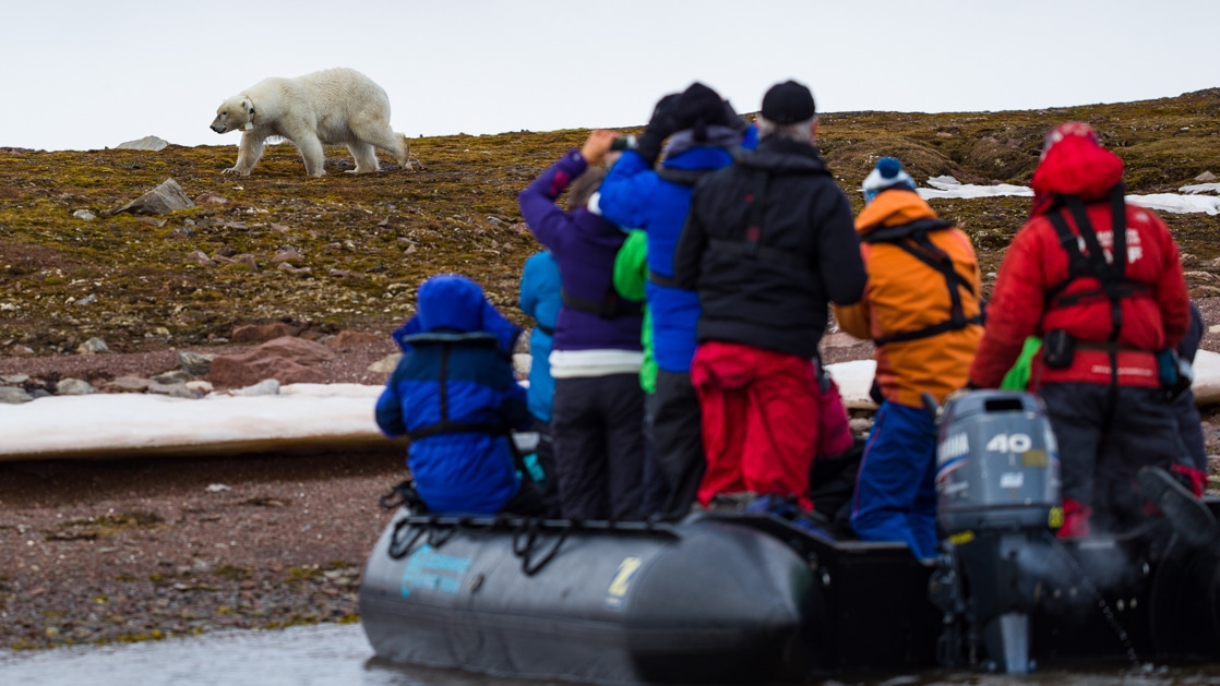Group of Arctic travelers sits & stands in a Zodiac along the shoreline, photographing a polar bear.