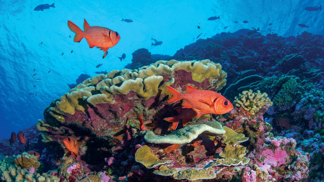 various orange and blue fish swimming around a vibrant coral head in a Pacific Islands reef on the Azure Seas from Tahiti to the Marquesas small ship cruise
