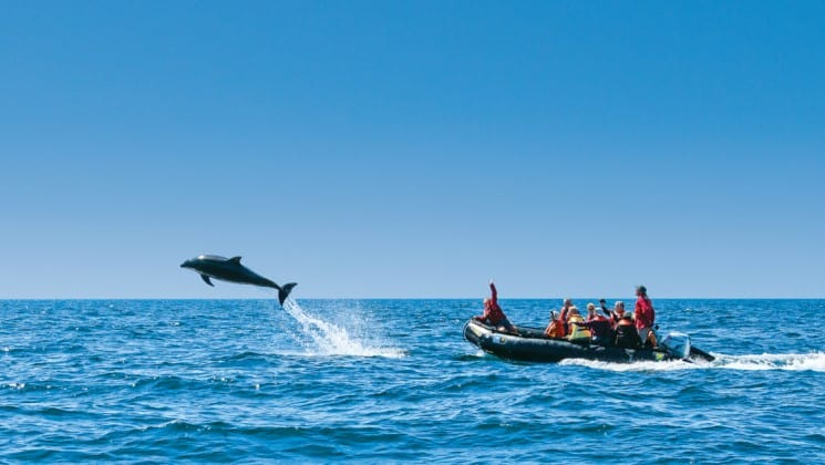 full zodiac behind jumping dolphin on baja among the great whales small ship cruise