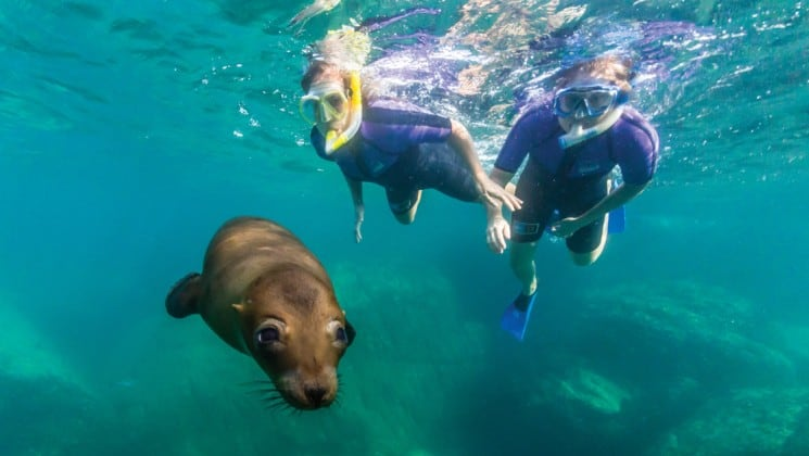 two snorkelers and sea lion underwater in baja, california