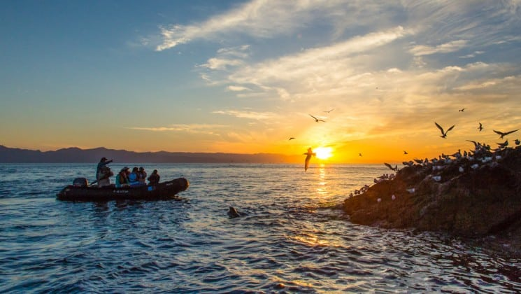 zodiac at sunset passing point covered in sea birds in baja