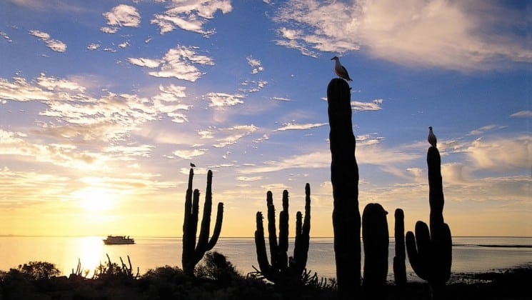 cacti at sunrise with baja: a remarkable journey small ship cruise in distance