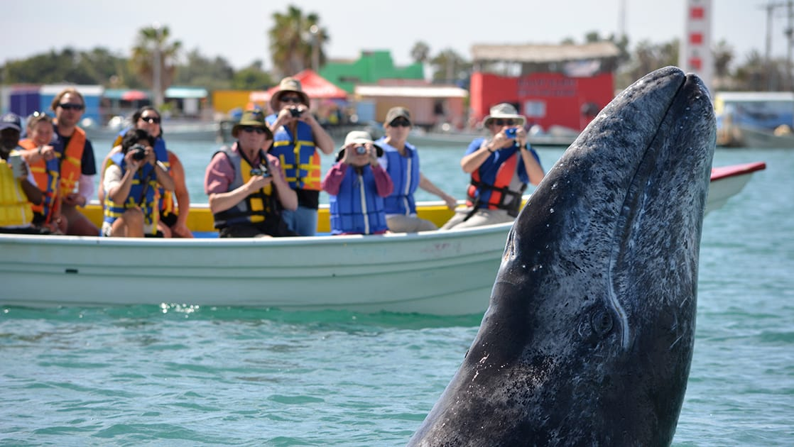 Baja travelers in a small dinghy photograph a whale on a sunny day during the Baja's Bounty cruise
