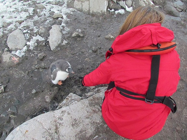 Small cruise ship guest kneeling next to a penguin in Antarctica.