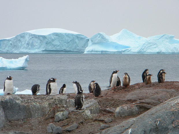 Group of penguins with glaciers in the background seen from a small ship cruise in Antarctica.