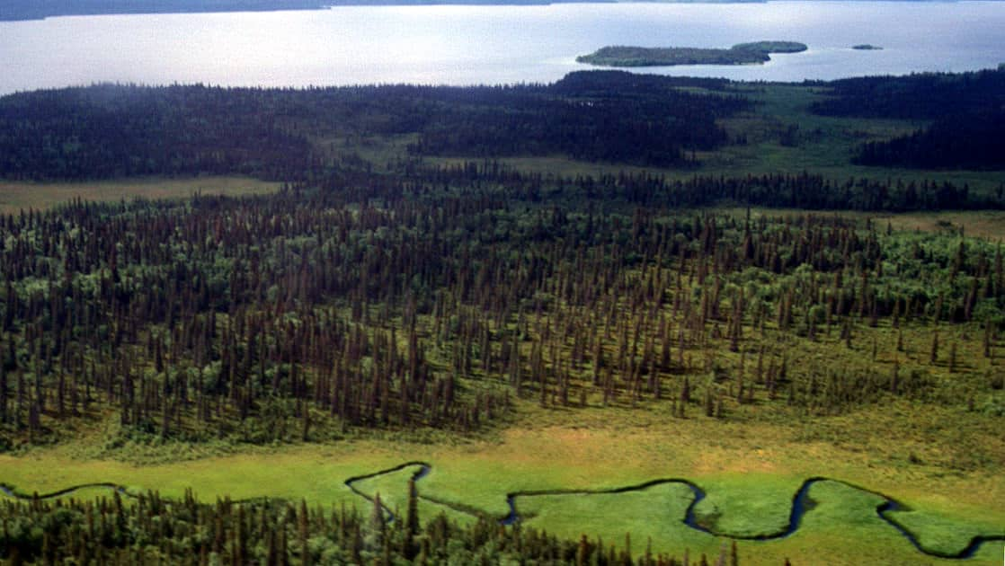 aerial view of a winding river going through the bright green valley surrounded by trees on both sides in katmai alaska