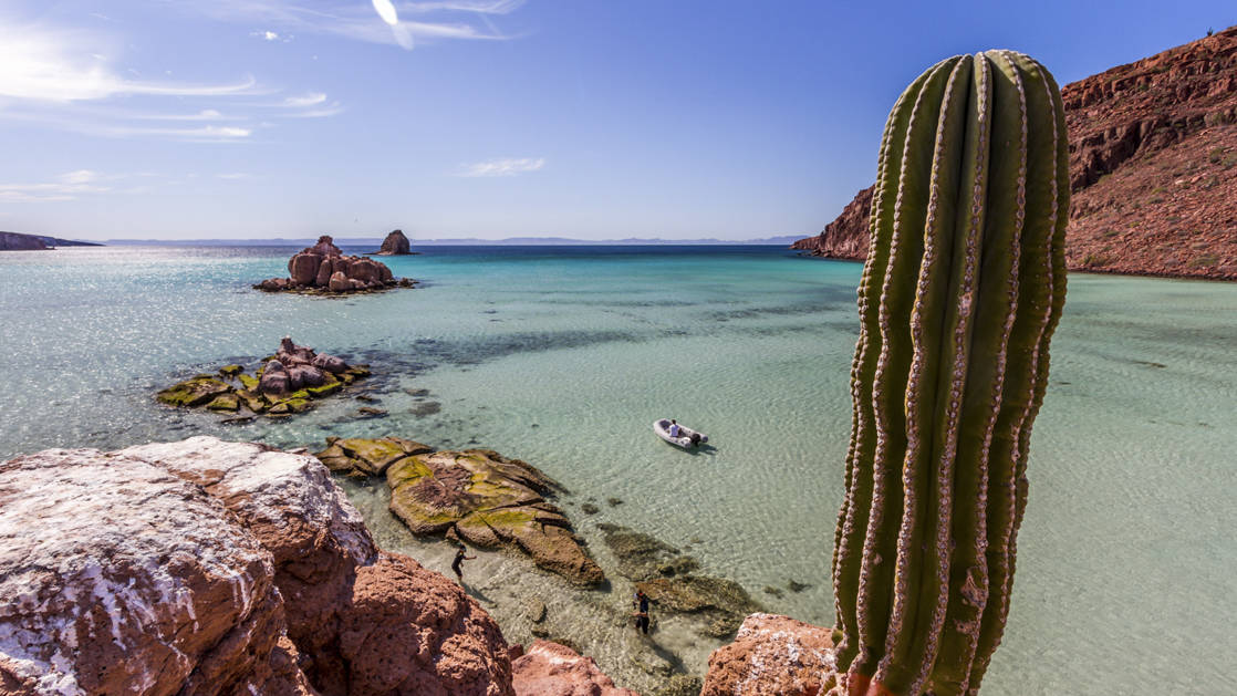 A view of the turquoise water with a cactus in the foreground