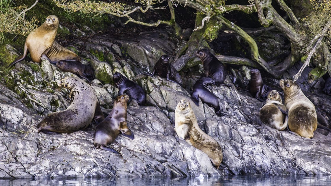 Sea lions hanging out on rocks in Patagonia