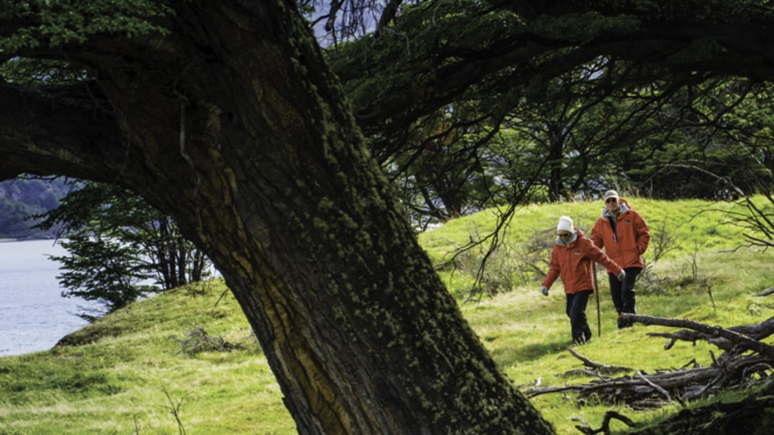 Couple hiking on the grass near the water with a large tree in front in Tierra del Fuego, Chile