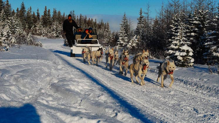 A dog sled driving through the snowy forest.