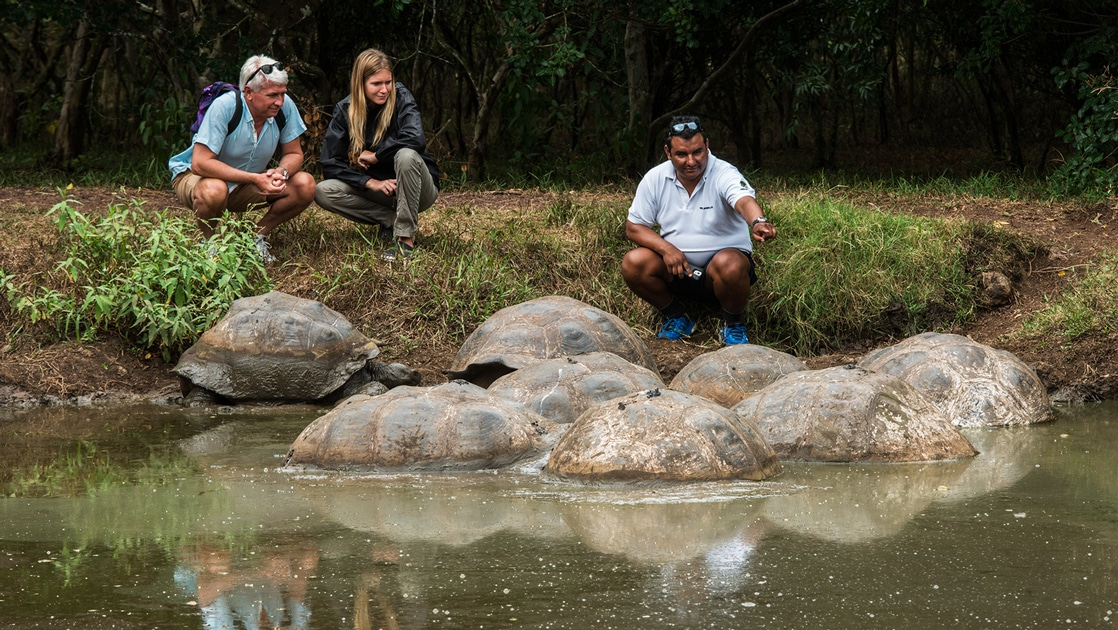 A Galapagos naturalist guide and two Coral cruise guests kneel on the banks of a pond and watch 8 giant tortoises in the water.