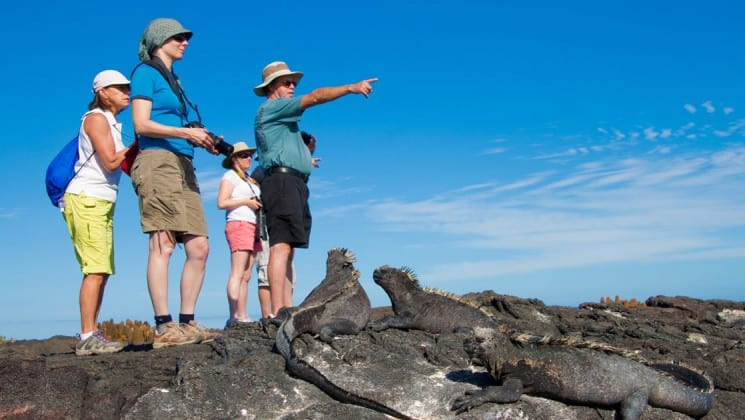 galapagos travelers standing on rocks pointing with a group of marine iguanas below them on a sunny day
