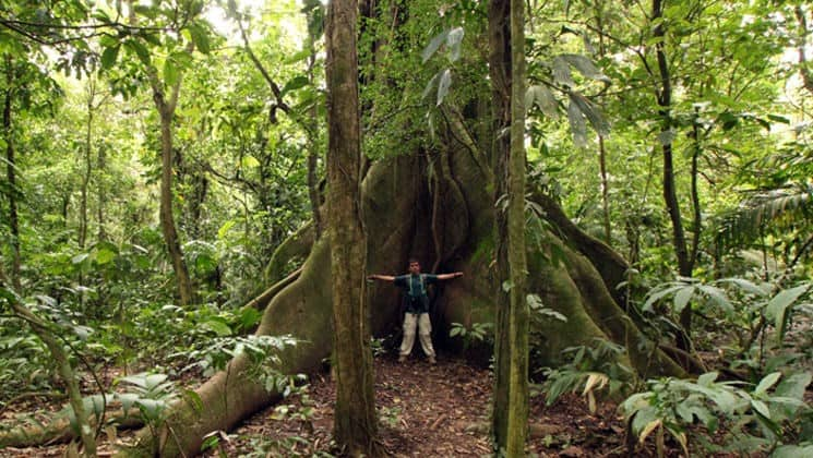man with arms spread across trunk of giant tree on costa rica family adventure